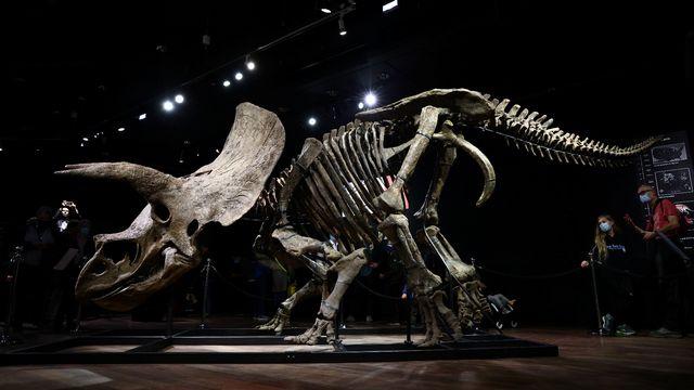 """""""Big John"""", le plus grand tricératops connu, adjugé 6,6 millions d'euros à Paris. [Sarah Meyssonnier - Reuters]"""