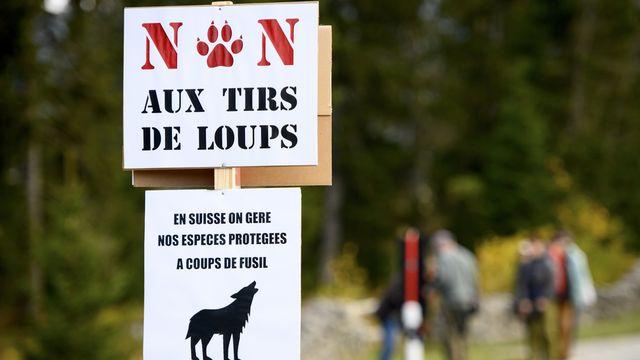 """Des pancartes """"Non au tirs de loups"""" et En Suisse on gere nos especes protegees a coups de fusil"""" lors d'une manifestation contre le tir du loup ce samedi 9 octobre 2021 au Col du Marchairuz a Le Chenit dans le canton de Vaud. [Laurent Gillieron - Keystone]"""
